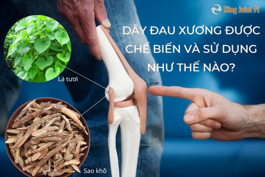 Dây đau xương được chế biến và sử dụng như thế nào?