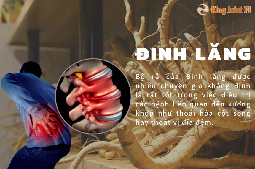 Đinh lăng - Các loại cây chữa bệnh xương khớp hiệu quả